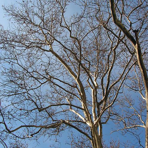 Baumzeichen