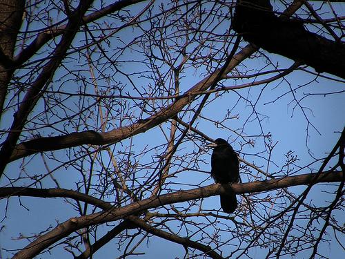 Baumzeichen mit Vogel