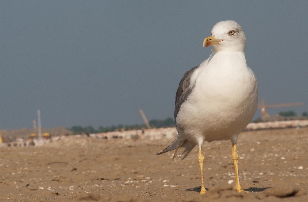 Vogel, neugierig