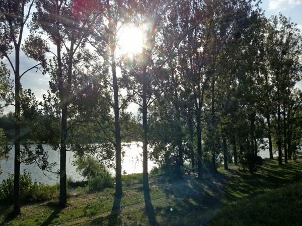 2013-09-01_sonne
